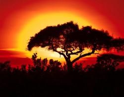 afr-sunset